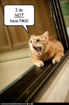 hysterical http://sulia.com/channel/cats/f/a3da3d71-87a7-4d06-bba6-81c69b73b469/?