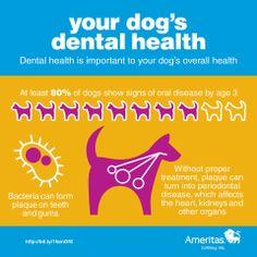 your dog's #dental health #dog