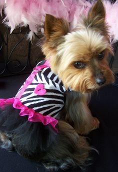 Dog Harness Dress in Zebra and Hot Pink                                                                                                          .:BēLLäSFãSh!oN:.