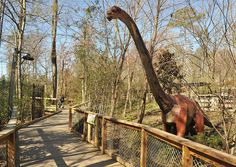 The Dino Discovery exhibit at the Birmingham Zoo will open to the public Saturday March 16, 2013 at noon.