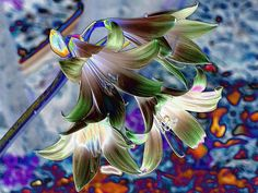 Coloured Foil effect for March Lilies Lilies, March, Collage, Plants, Painting, Color, Irises, Collages, Painting Art