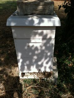 Bees at home in the Arb