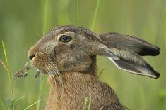 Birds 2, Pet Birds, Hare Pictures, Bunny Art, Factories, Hobbies And Crafts, Rabbits, Fabric, Animals