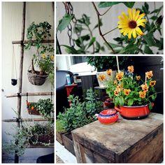 seiväs Plants, Flora, Plant, Planting
