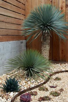 Garden edging is a fixed material that functions as a crisp border between beds and other areas. Various stylish garden edging ideas are available to build a well-designed landscape. Drought Resistant Landscaping, Low Water Landscaping, Drought Tolerant Garden, Succulent Landscaping, Landscaping With Rocks, Front Yard Landscaping, Succulents Garden, Landscaping Ideas, Succulent Rock Garden