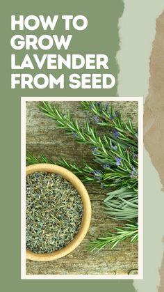 Potted Lavender, Growing Lavender, Growing Herbs, Growing Vegetables, Herb Farm, Herb Garden, Container Gardening, Gardening Tips, Pinterest Garden