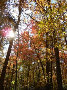 Gambrill State Park, Maryland