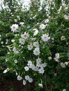 Flowering Shrubs, Tropical Garden, Botanical Gardens, Landscape, Flowers, Plants, Flowering Bushes, Scenery, Tropical Gardens