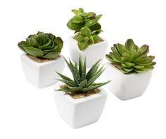 Műnövények HAAKON ma9cm vegyes | JYSK
