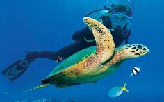Best Islands for Scuba Diving - Travel Channel Best Beach In Florida, Florida Beaches, Sandy Beaches, Mozambique Beaches, Hanauma Bay, Deep Sea Fishing, Vero Beach, Travel Channel, Underwater World