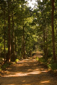 The forest by Moumita Ghorai on 500px