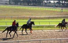 Morning Training at Tampa Bay Downs!