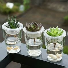 hydroponics - Growing plants in water Growing Succulents, Cacti And Succulents, Growing Plants, Planting Succulents, How To Propagate Succulents, Cactus House Plants, Terrarium Plants, Garden Plants, Succulent Gardening