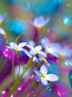 Jenn's Random Scraps — natures-garden: Genuine Love by *martintinaz Wild Flowers, Beautiful Flowers, Meadow Flowers, Happy Flowers, Purple Flowers, Colorful Flowers, Spring Flowers, Foto Poster, Jolie Photo