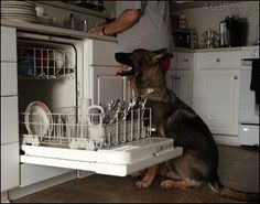 Dog Helping To Fill The Dishwasher