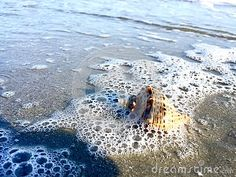 A beautiful shell underwater .Picture at BlackSea