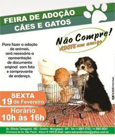 BONDE DA BARDOT: SP: Campanha de adoção de animais em Mongaguá acontece nesta sexta (19/02)
