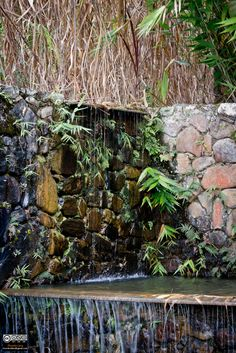 Fazenda Vargem Grande, Jardins de Roberto Burle Marx - Areias, SP - Ricardo Lima