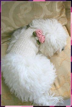 Wedding Dog harness, Pet clothing, Dog harness vest, Dog Harness Dress, Dog dress, Dog clothing, Crochet dog vest, BubaDog Dog Furniture, Dog Clothes Patterns, Pet Clothes, Dog Clothing, Dog Wedding, Dog Carrier, Dog Sweaters, Dog Dresses, Pet Grooming