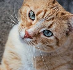 9 Fun Facts About Orange Tabby Cats