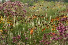 Prairieplants