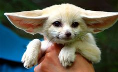 # Exotic Animals That You Could Totally Have As Pets 29