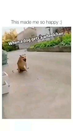 Cute Animal Memes, Cute Animal Photos, Funny Animal Videos, Cute Funny Animals, Cute Baby Animals, Funny Cute, Cute Dogs, Romantic Comedy Movies, Cute Reptiles