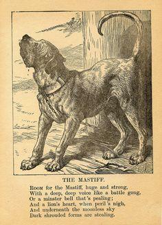 MASTIFF DOG PETS ANIMALS ANTIQUE PRINT 1894