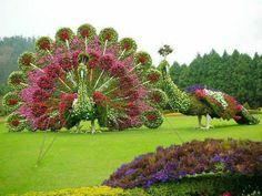 Peacock made of flowers, garden