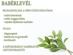 Babérlevél | Socialhealth Chocolate Face Mask, Jaba, Healthy Lifestyle, Herbs, Alternative, Therapy, Weight Loss, Health, Counseling