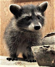 Little Bandit