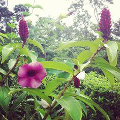 Más del jardín