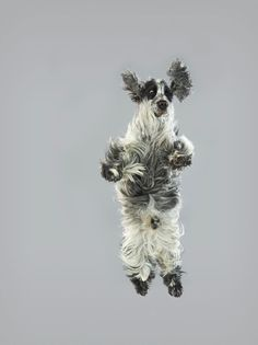 Air of the dog! Posing pooches pull funny faces as they fall to ...