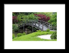 st louis, missouri, botanical garden, bridge, garden, water, tree, nature, landscape, michiale schneider photography