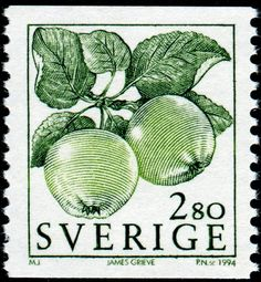 James Grieve is a variety of apple named after its breeder who raised the apple from pollination of a Pott's Seedling or a Cox's Orange Pippin apple in Edinburgh, Scotland some time before 1893. Here is an image of a stamp depicting a couple of James Grieve apples, designed by M. Jacobsson, engraved by Piotr Naszarkowski, and issued by Sweden on January 17, 1994, Scott No. 2005, Facit No. 1820.