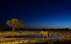 Etosha National Park, Namibia: At all the rest camps have watering holes that you can view 24 hrs. So amazing we spotted two lions in the tall grass thanks to a buddy we had made (from Witbank haha) otherwise we would never have seen them!