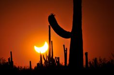 Solar eclipse as seen from Ironwood Forest National Monument, Arizona - Norma Jean Gargasz/Alamy
