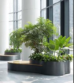 Ie white 's 663 sharing analytics Interior Design Plants, Interior Garden, Plant Design, Indoor Garden, Indoor Plants, Horticulture, Formal Garden Design, Lobby Furniture, Lobby Interior