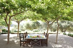 The simple, inexpensive and easy to maintain patio is made with pollarded fruitless mulberries that create a lush, natural arbor out of inte...