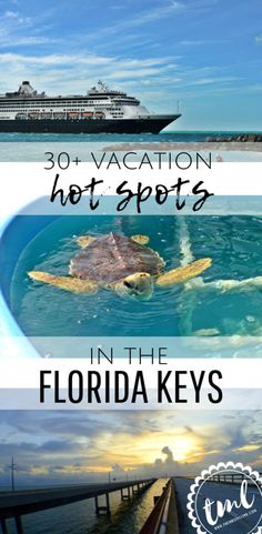 Best Place to Swim with Dolphins in Orlando. Visit SeaWorld, Discovery Cove and Aquatica in Orlando, Florida. Best Places In Florida, Florida Vacation Spots, Florida Travel, Florida Beaches, Vacation Ideas, Vacation Travel, Florida Keys Honeymoon, Vacation Movie, Orlando Vacation