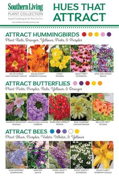 BIRDS, BEES AND BUTTERFLIES, OH MY! Attracting Pollinators to the Garden. These are some of the plants that help you to have a successful Fruit and Veggie Garden and make these little creatures happy too, hey? Garden Projects, Hummingbird Garden, Plants, Bee Garden, Butterfly Plants, Plant Care, Garden Planning, Hummingbird Plants, Garden Plants