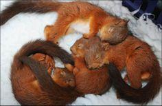 Aaawwwww.... Squirrel babies