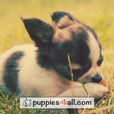 Learn more about your lovely buddy on our site: Your Best Friend, Best Friends, Loyal Friends, Puppies, Cute, Movie Posters, Animals, Amazing, Beat Friends
