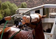 Civil Suit Filed in Reining Horse's Death   Rate My Horse PRO