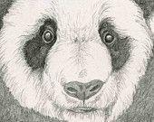 Panda Bear Original Pencil Drawing Wildlife Art-Carla Smale. $20.00, via Etsy.