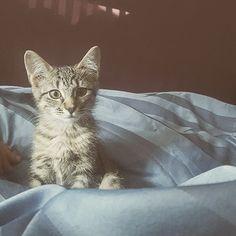 My best friend adopted a new kitten. Meet Giles!