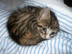 Cutest kitten!