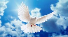 A dove is Holy to me because I had been taught that it symbolizes a sign of the holy spirit.