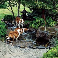 5 Different Kinds Of Garden Sheds To Consider Building - this pic doesn't make sense for a shed post but I love the water feature. My dogs would go use it the same way.