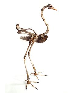 """Francesca68""""x35x35""""Ostrich bones, antique brass hardware & lamp fittings, turtle shell, leather, glass eyes"""